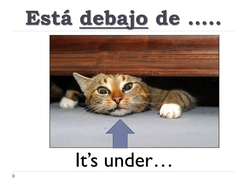 Está debajo de ….. It's under…