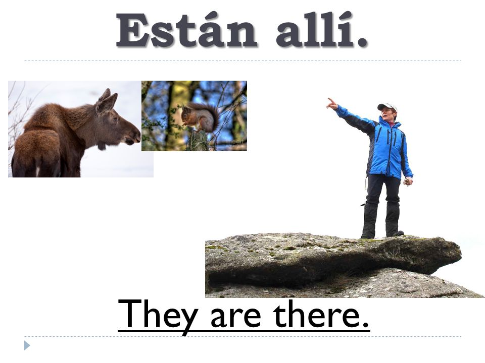 Están allí. They are there.