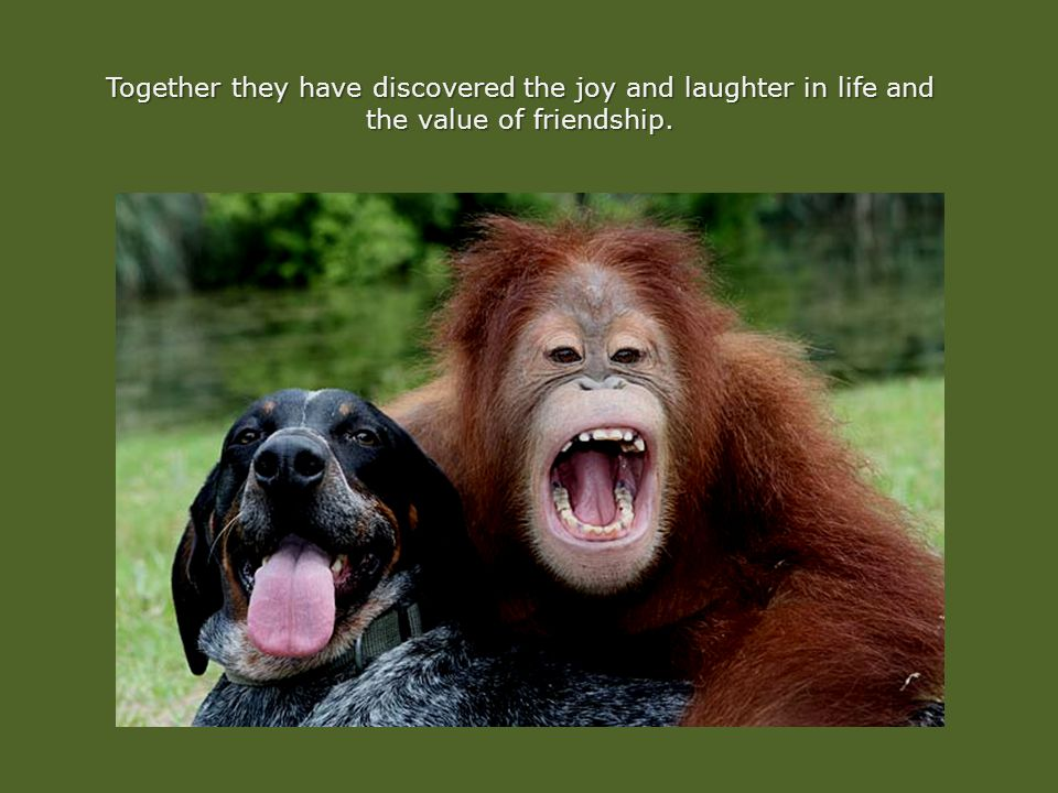 Together they have discovered the joy and laughter in life and the value of friendship.