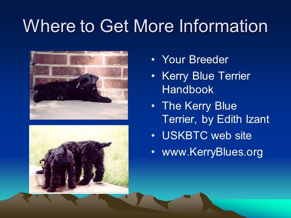 Where to Get More Information Your Breeder Kerry Blue Terrier Handbook The Kerry Blue Terrier, by Edith Izant USKBTC web site www.KerryBlues.org