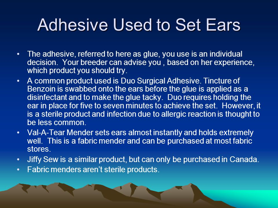 Adhesive Used to Set Ears The adhesive, referred to here as glue, you use is an individual decision.