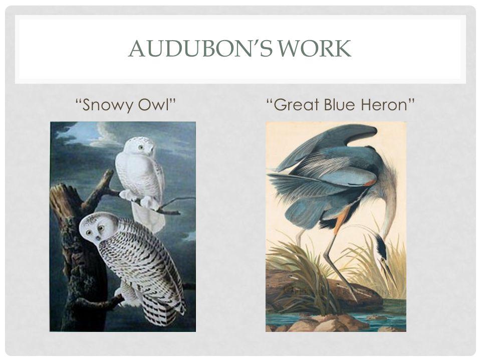 AUDUBON'S WORK Snowy Owl Great Blue Heron
