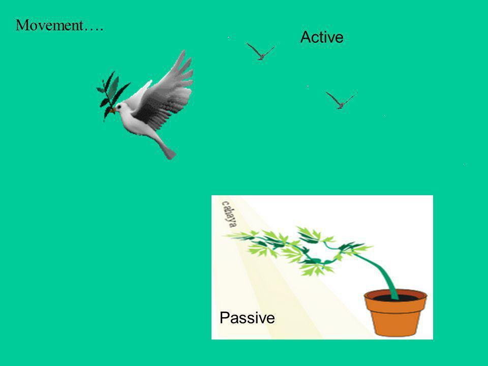 Movement…. Active Passive