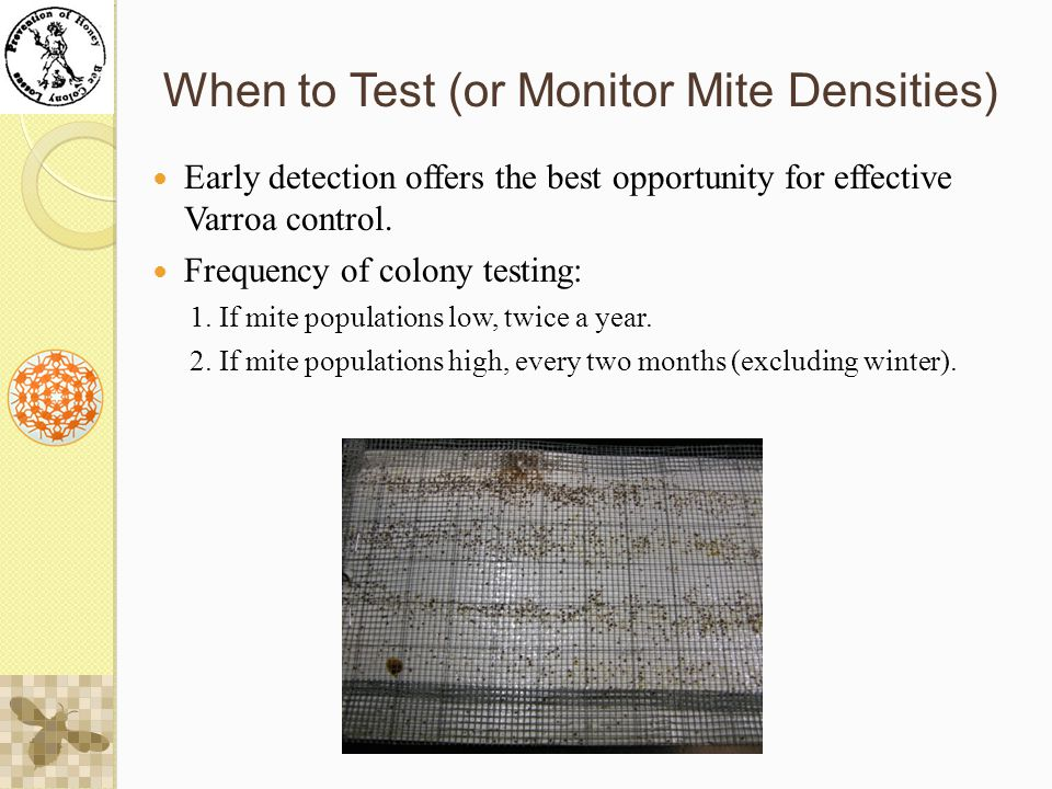 When to Test (or Monitor Mite Densities) Early detection offers the best opportunity for effective Varroa control.