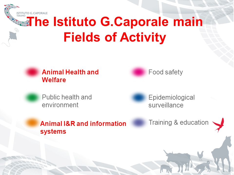 EU animal ID and R framework Directive 2008/71/EC on pig identification and registration (ex- 92/102/EEC) Regulation (EC) 1760/2000 on bovine identification and registration Regulation (EC) 21/2004 on ovine and caprine identification and registration EU animal traceability ; Individual identification of animals On farm registers National databases (fully operational) Passports Electronic identification TRACES Intra-EU trade Inter-operability of bovine databases (BOVEX pilot)