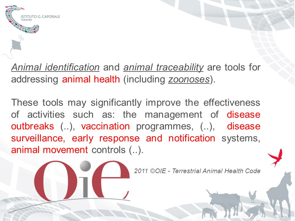 Animal identificationAnimal identification and animal traceability are tools for addressing animal health (including zoonoses).animal traceabilityzoonoses These tools may significantly improve the effectiveness of activities such as: the management of disease outbreaks (..), vaccination programmes, (..), disease surveillance, early response and notification systems, animal movement controls (..).