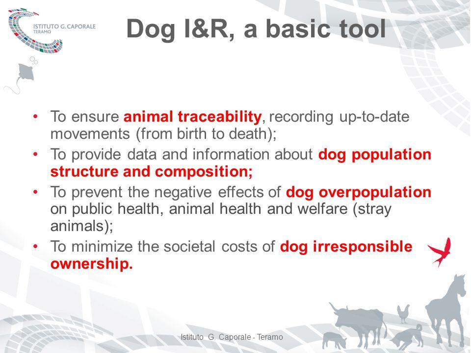 Is dog identification mandatory.
