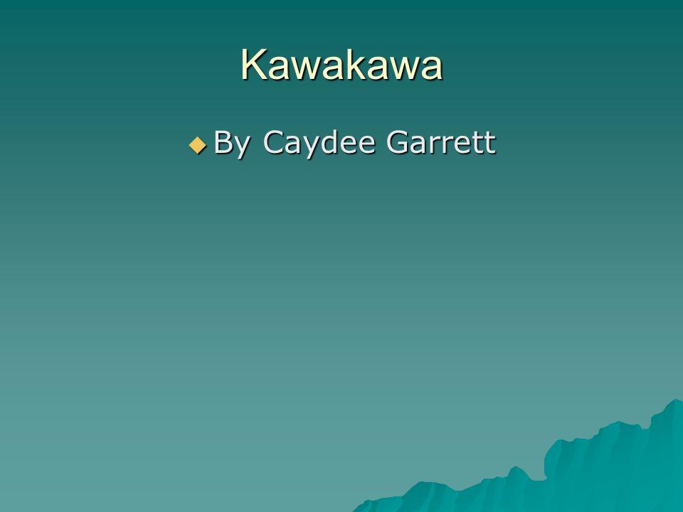 Kawakawa  By Caydee Garrett