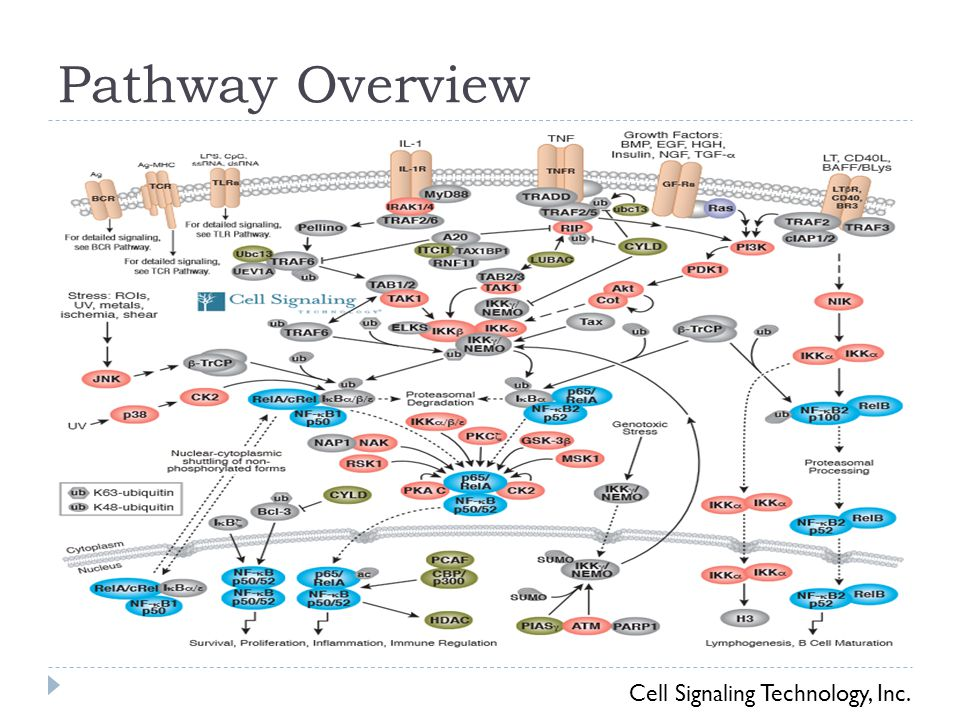 Pathway Overview Cell Signaling Technology, Inc.