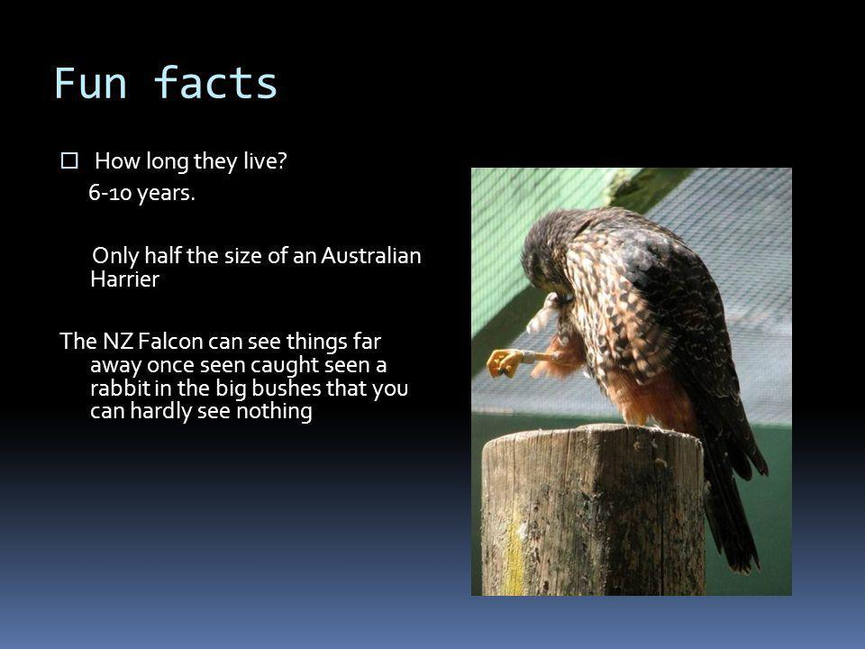 Fun facts  How long they live. 6-10 years.