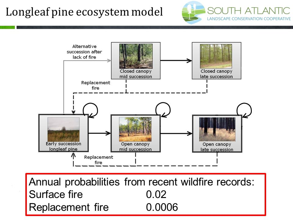 Annual probabilities from recent wildfire records: Surface fire0.02 Replacement fire0.0006 Longleaf pine ecosystem model