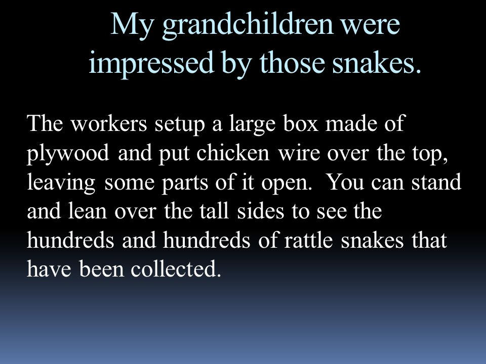 My grandchildren were impressed by those snakes. The workers setup a large box made of plywood and put chicken wire over the top, leaving some parts o