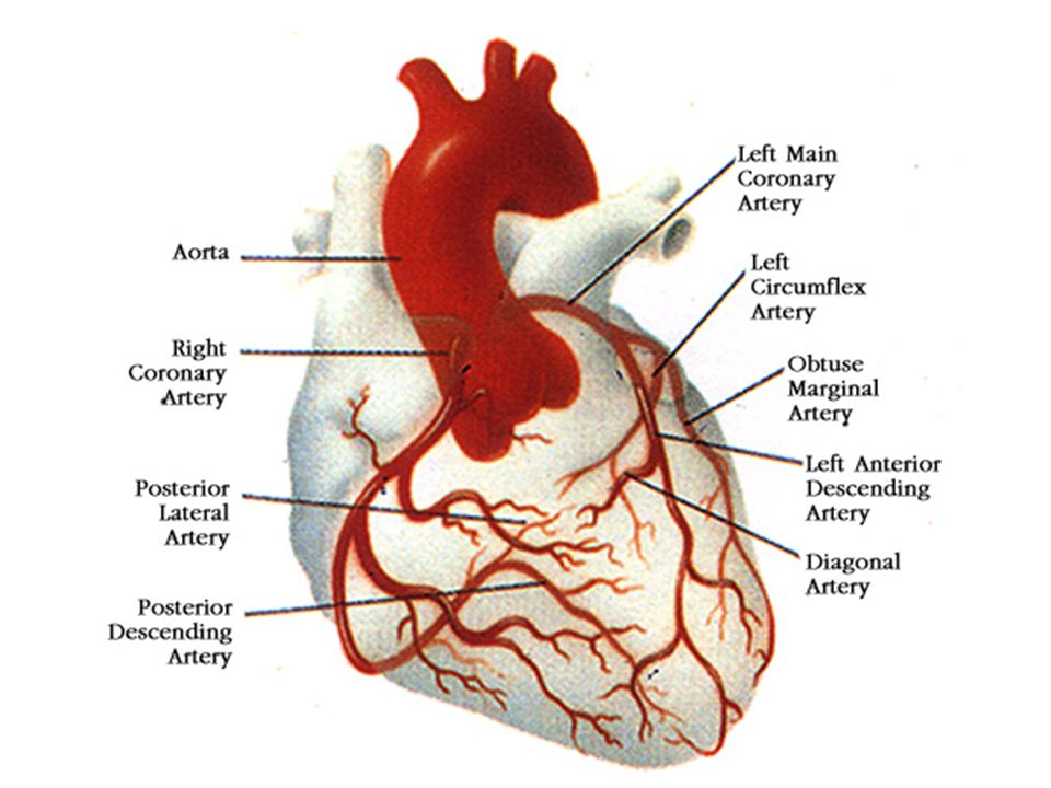 Determinants of Treatment Goals Several schemes – Number of CAD risk factors – Ten year Framingham risk score – CHD equivalent Diabetes Other atherosclerotic diseases (PAD, AAA, carotid atherosclerosis