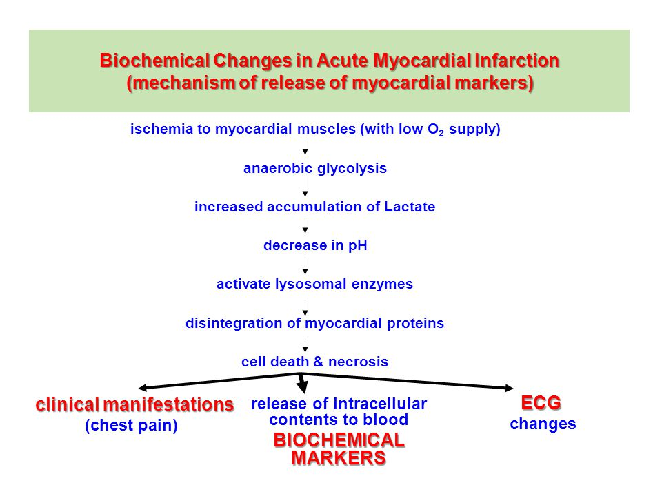 Biochemical Changes in Acute Myocardial Infarction (mechanism of release of myocardial markers) ischemia to myocardial muscles (with low O 2 supply) anaerobic glycolysis increased accumulation of Lactate decrease in pH activate lysosomal enzymes disintegration of myocardial proteins cell death & necrosis release of intracellular contents to blood BIOCHEMICAL MARKERS clinical manifestations (chest pain) ECG changes