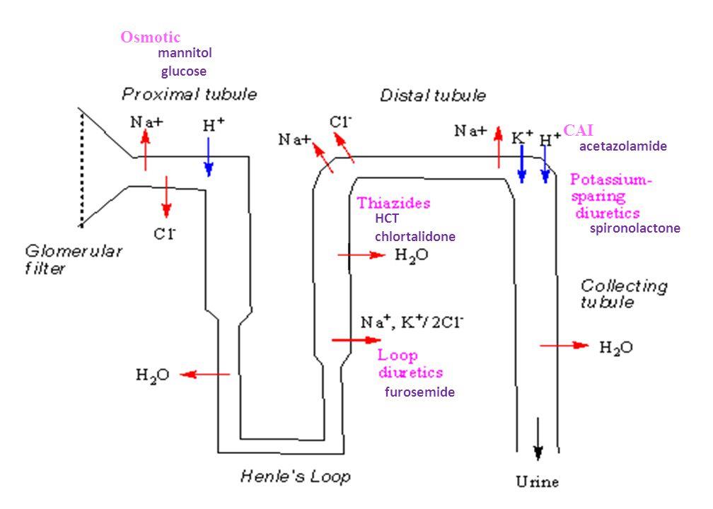 Osmotic mannitol glucose furosemide HCT chlortalidone spironolactone CAI acetazolamide