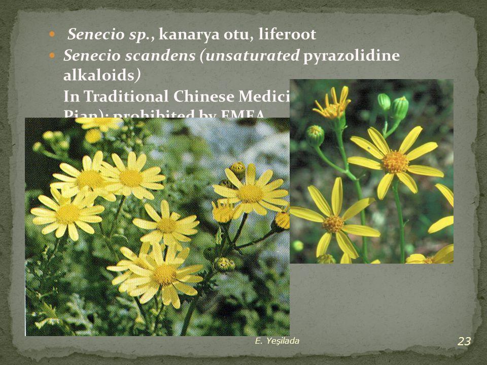 Senecio sp., kanarya otu, liferoot Senecio scandens (unsaturated pyrazolidine alkaloids) In Traditional Chinese Medicine (Qianbai Biyan Pian); prohibi
