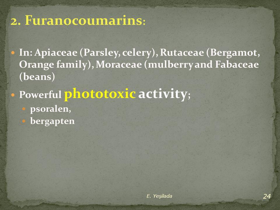 2. Furanocoumarins : In: Apiaceae (Parsley, celery), Rutaceae (Bergamot, Orange family), Moraceae (mulberry and Fabaceae (beans) Powerful phototoxic a