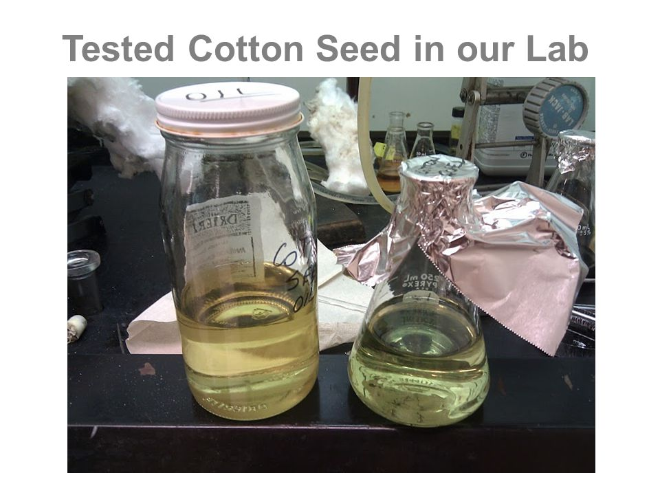 Tested Cotton Seed in our Lab