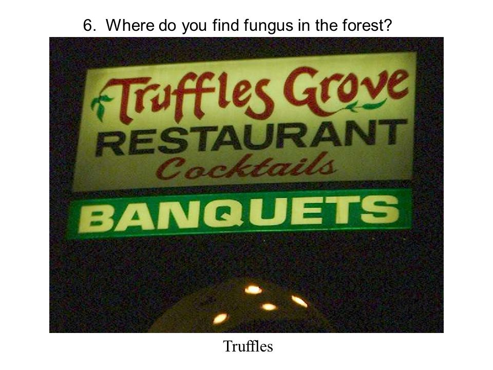 6. Where do you find fungus in the forest Truffles