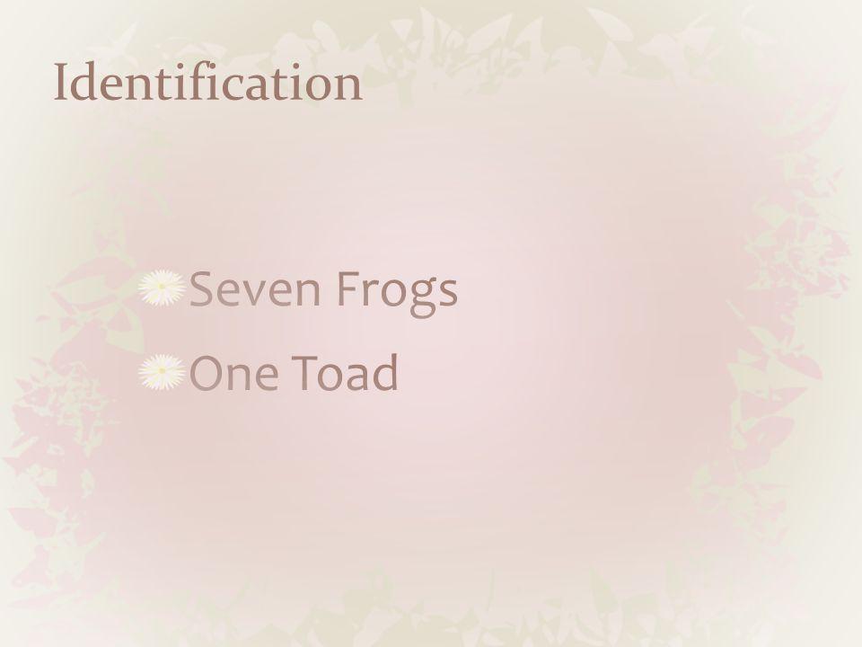 Bull Frog 8 in.