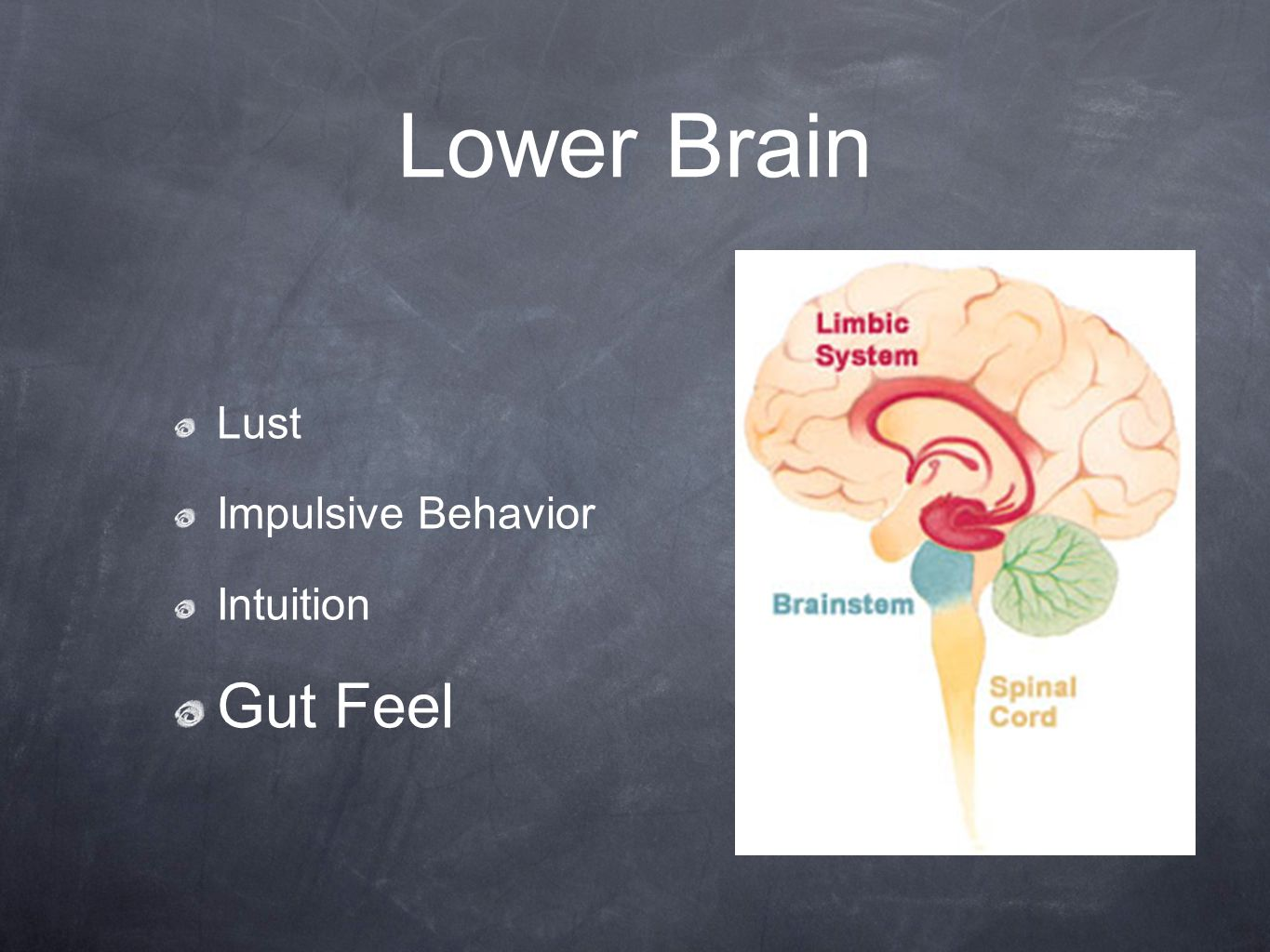 Lower Brain Lust Impulsive Behavior Intuition Gut Feel