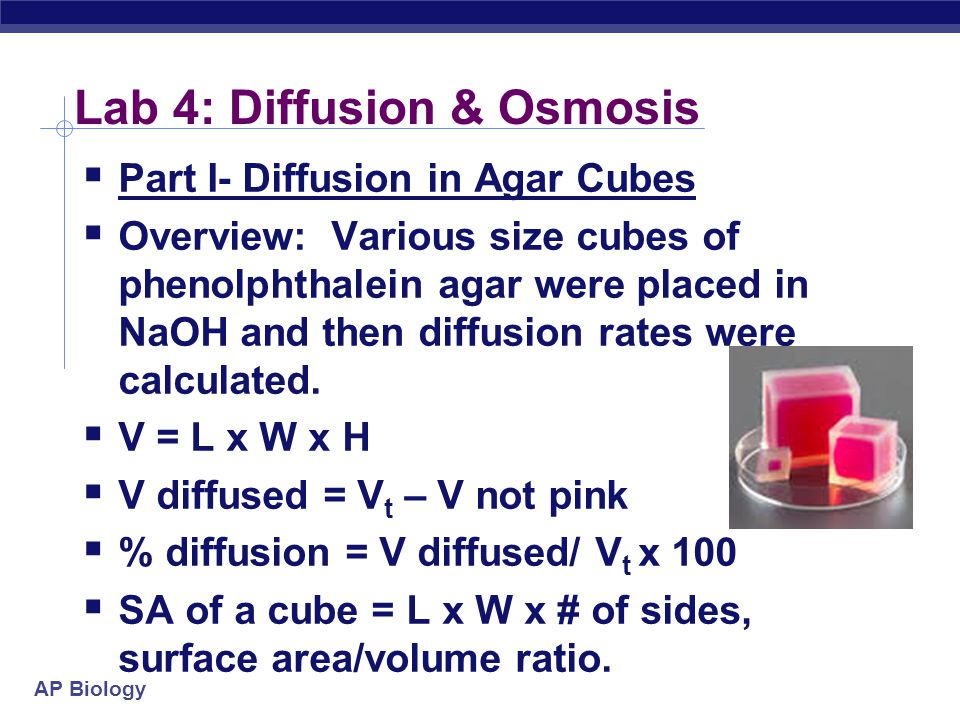 AP Biology Lab 4: Diffusion & Osmosis  Part I- Diffusion in Agar Cubes  Overview: Various size cubes of phenolphthalein agar were placed in NaOH and then diffusion rates were calculated.