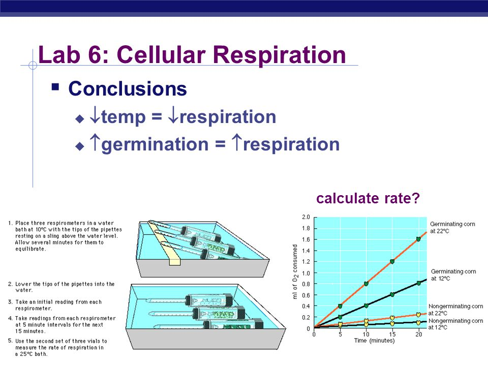 AP Biology Lab 6: Cellular Respiration  Concepts  respiration  experimental design  control vs. experimental  function of KOH  function of vial