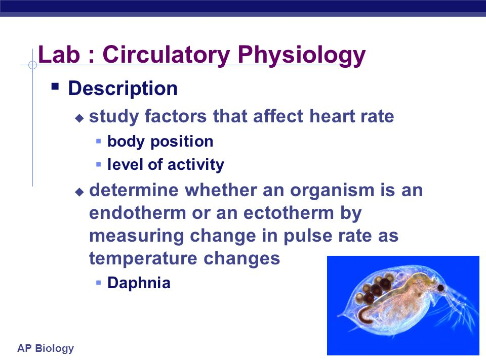 AP Biology Lab : Circulatory Physiology  Description  study factors that affect heart rate  body position  level of activity  determine whether an organism is an endotherm or an ectotherm by measuring change in pulse rate as temperature changes  Daphnia