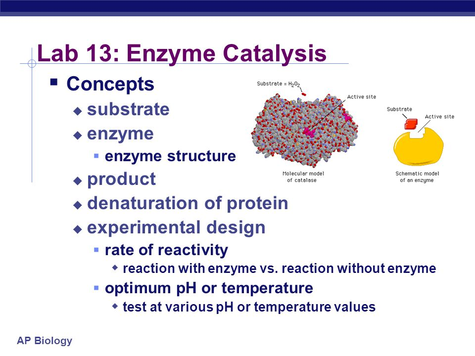 AP Biology Lab 13: Enzyme Catalysis  Concepts  substrate  enzyme  enzyme structure  product  denaturation of protein  experimental design  rate of reactivity  reaction with enzyme vs.