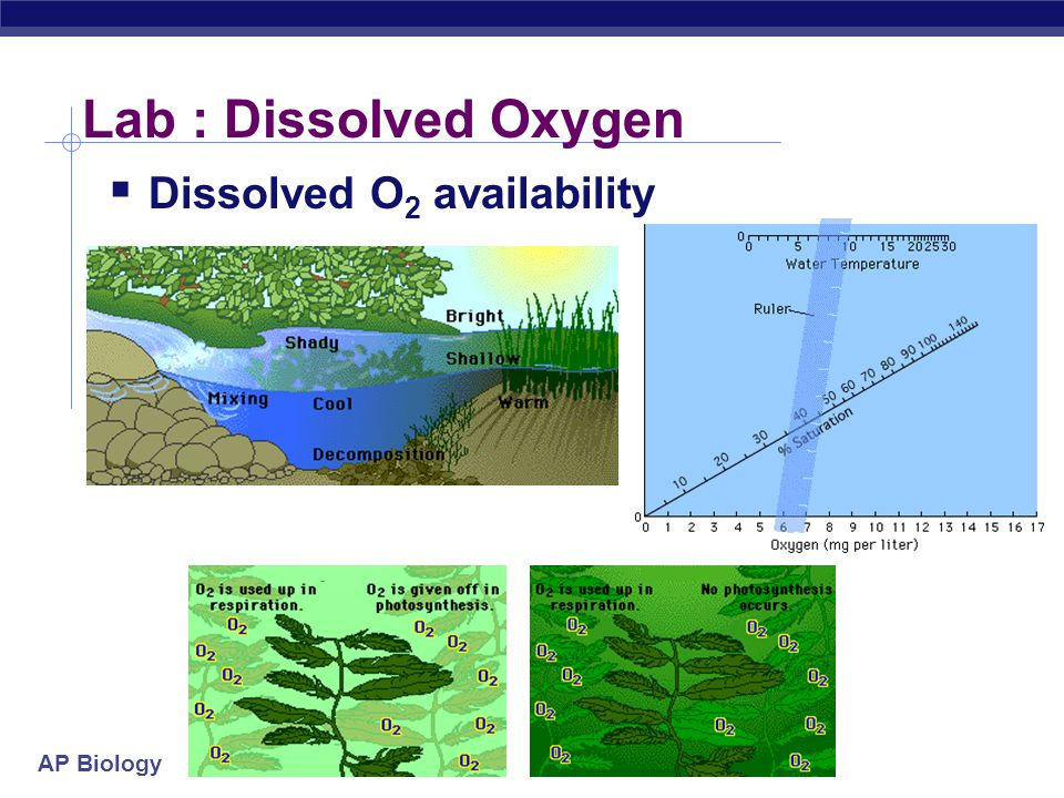 AP Biology Lab : Dissolved Oxygen  Dissolved O 2 availability