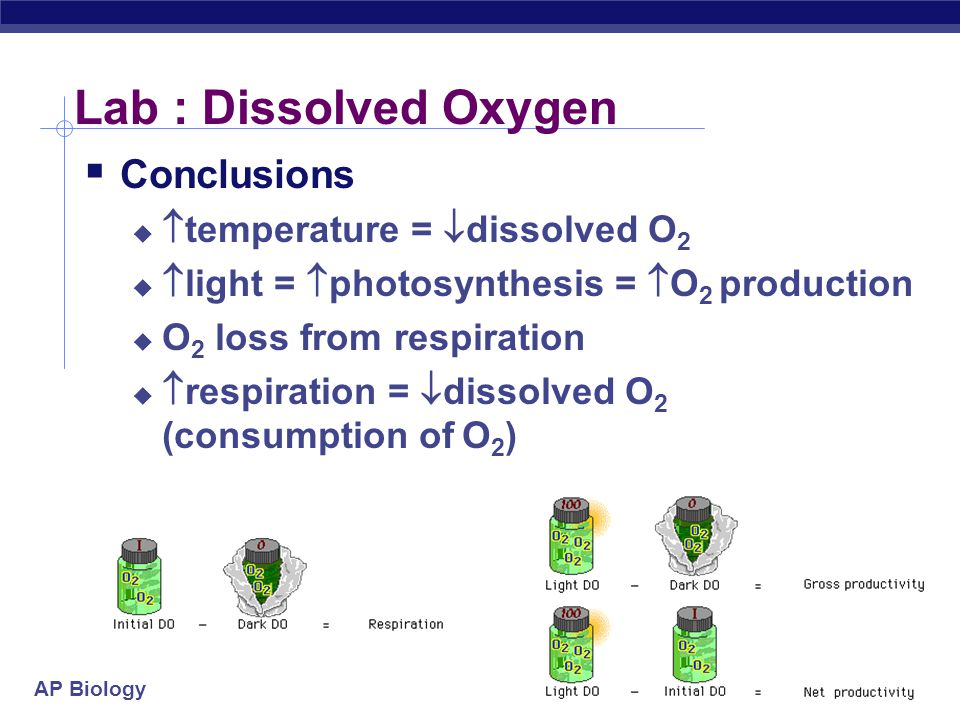 AP Biology Lab : Dissolved Oxygen  Conclusions   temperature =  dissolved O 2   light =  photosynthesis =  O 2 production  O 2 loss from respiration   respiration =  dissolved O 2 (consumption of O 2 )