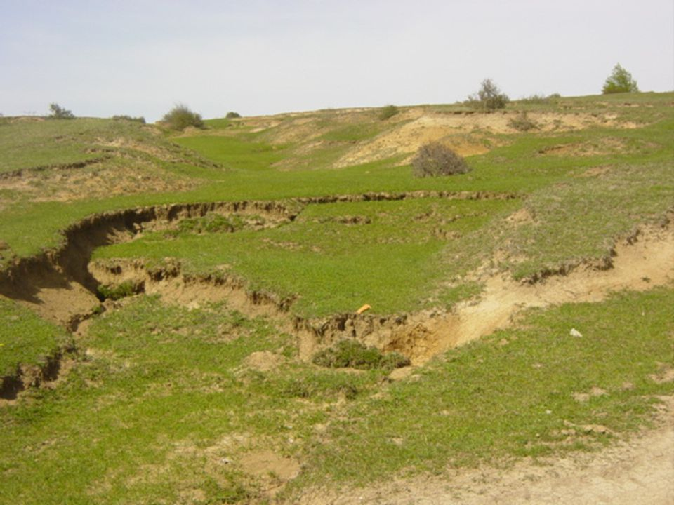 7 EPC Program Soil Erosion – The Main Source of Water Pollution Application of integrated practices against soil erosion - Practices Introduced:  Terracing;  Contour cultivation;  Buffer stripes;  Subsequent planting of annual and perennial crops;  Arrangement of water-diversion canals;  Lay-out and holing;  Construction of agro – terraces, etc.