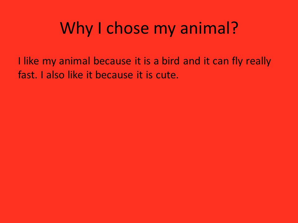 Why I chose my animal? I like my animal because it is a bird and it can fly really fast. I also like it because it is cute.