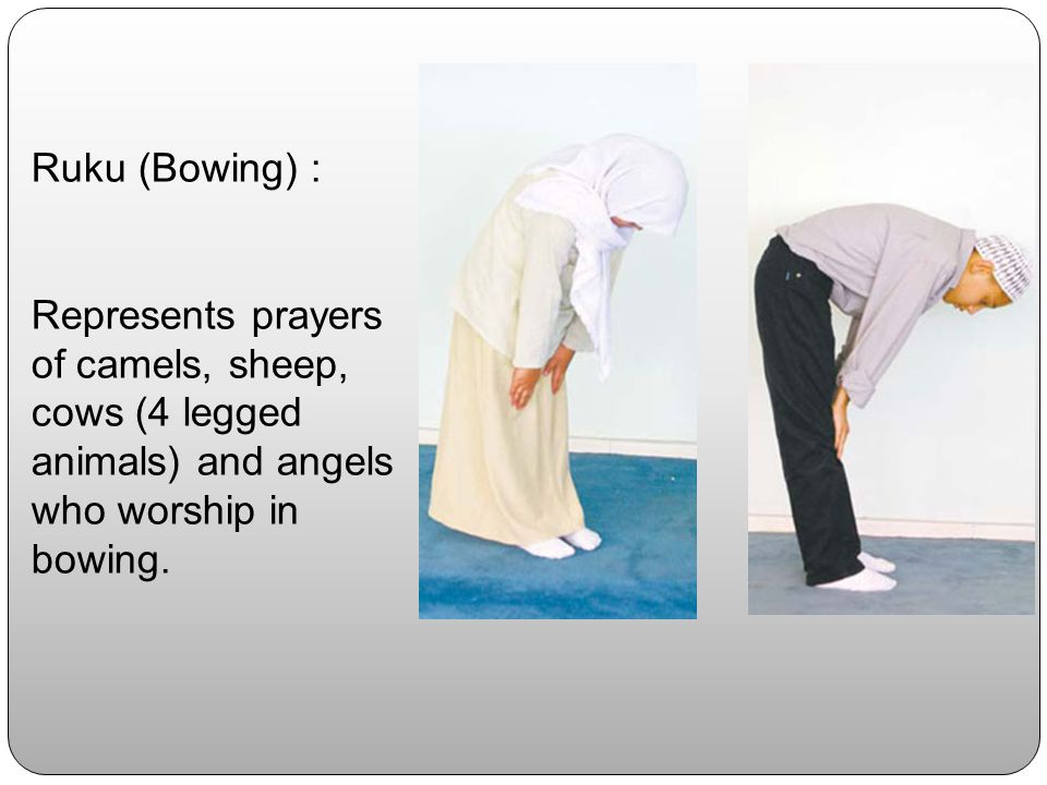 Ruku (Bowing) : Represents prayers of camels, sheep, cows (4 legged animals) and angels who worship in bowing.