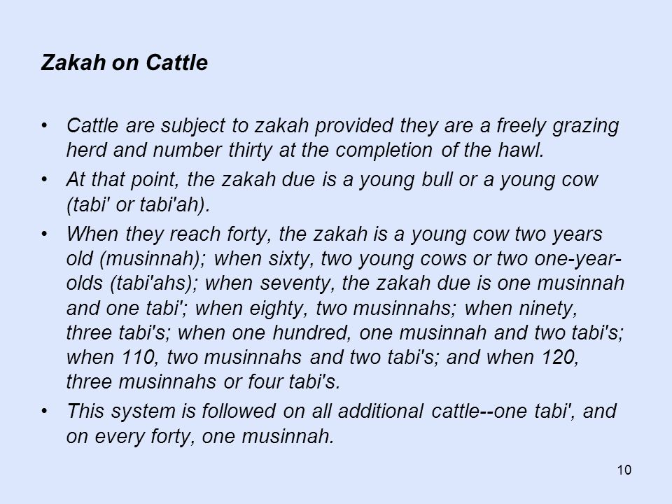 10 Zakah on Cattle Cattle are subject to zakah provided they are a freely grazing herd and number thirty at the completion of the hawl. At that point,