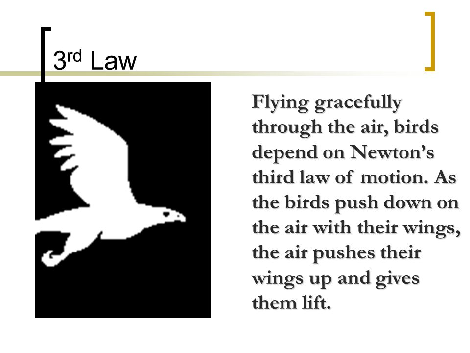 3 rd Law Flying gracefully through the air, birds depend on Newton's third law of motion.