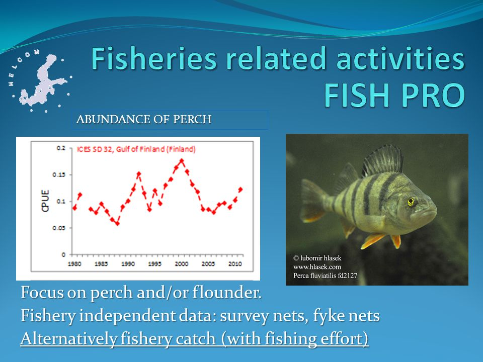 Focus on perch and/or flounder.