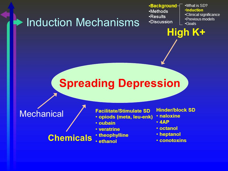 High K+ Chemicals Mechanical Spreading Depression Facilitate/Stimulate SD opiods (meta, leu-enk) oubain veratrine theophylline ethanol Hinder/block SD naloxine 4AP octanol heptanol conotoxins Induction Mechanisms Background Methods Results Discussion What is SD.