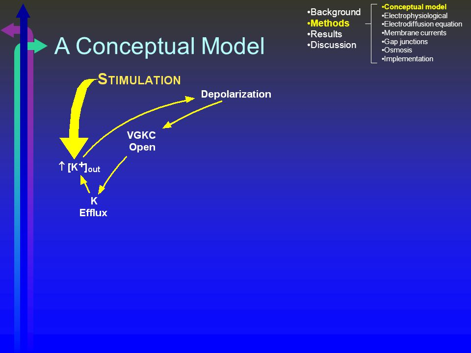 A Conceptual Model Background Methods Results Discussion Conceptual model Electrophysiological Electrodiffusion equation Membrane currents Gap junctions Osmosis Implementation