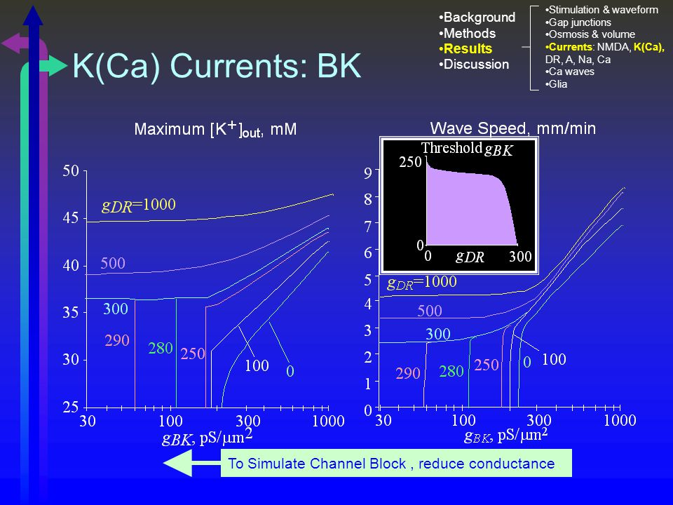 K(Ca) Currents: BK To Simulate Channel Block, reduce conductance Stimulation & waveform Gap junctions Osmosis & volume Currents: NMDA, K(Ca), DR, A, Na, Ca Ca waves Glia Background Methods Results Discussion