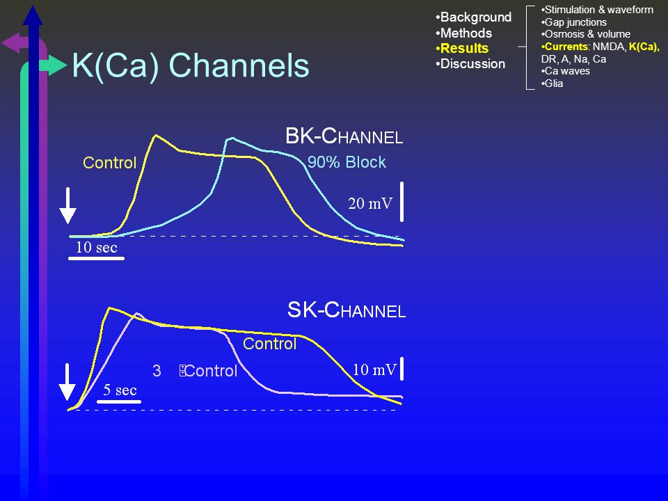 K(Ca) Channels Stimulation & waveform Gap junctions Osmosis & volume Currents: NMDA, K(Ca), DR, A, Na, Ca Ca waves Glia Background Methods Results Discussion