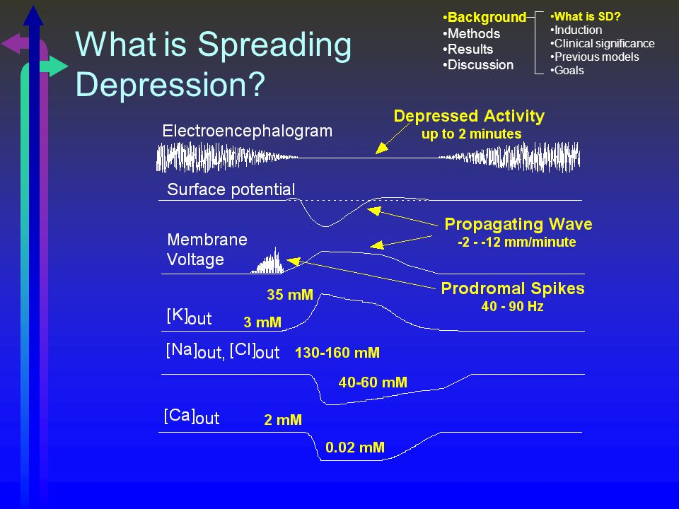 What is Spreading Depression. Background Methods Results Discussion What is SD.