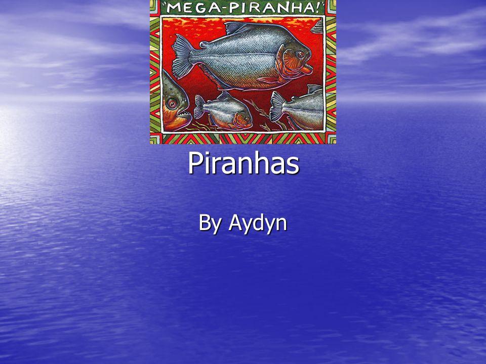 Piranhas By Aydyn