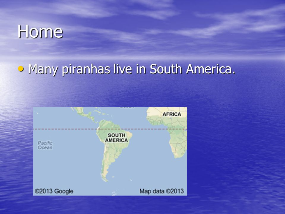 Home Many piranhas live in South America. Many piranhas live in South America.