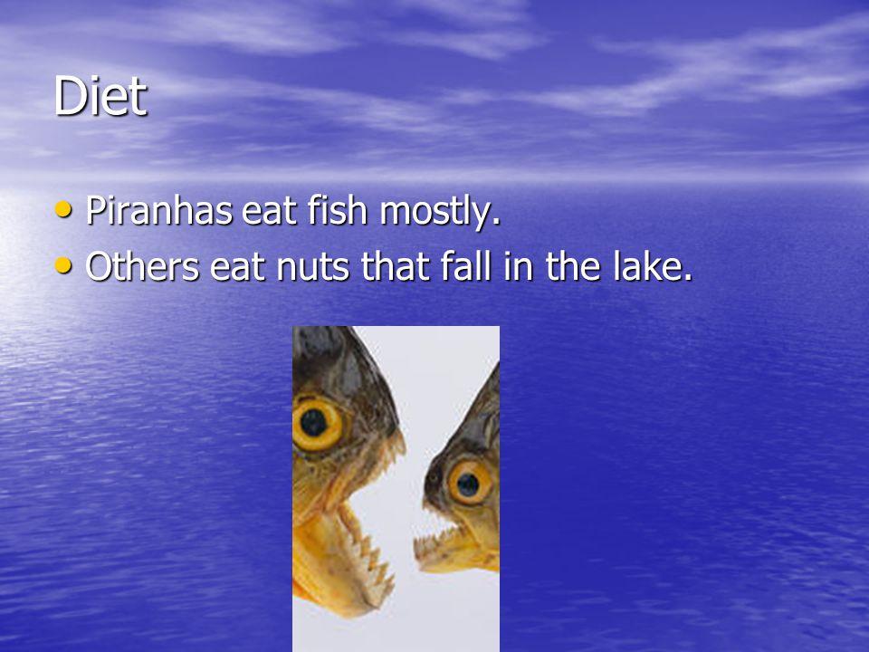 Enemies Enemies Many snakes will eat piranhas.Many snakes will eat piranhas.