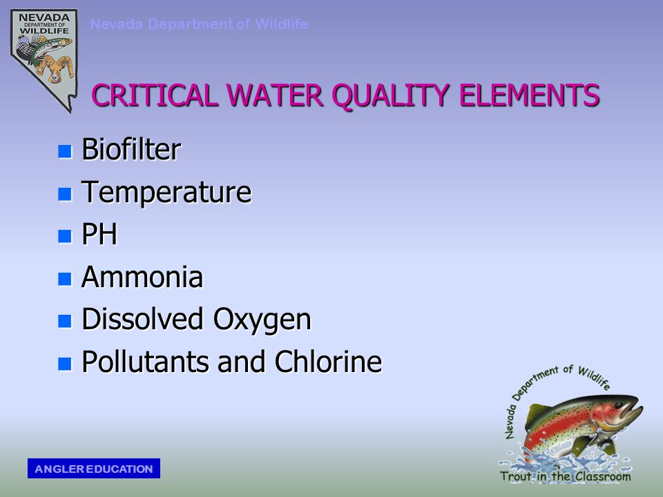 CRITICAL WATER QUALITY ELEMENTS n Biofilter n Temperature n PH n Ammonia n Dissolved Oxygen n Pollutants and Chlorine Nevada Department of Wildlife ANGLER EDUCATION