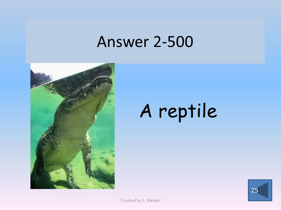 Answer 2-500 25 A reptile Created by S. Weider