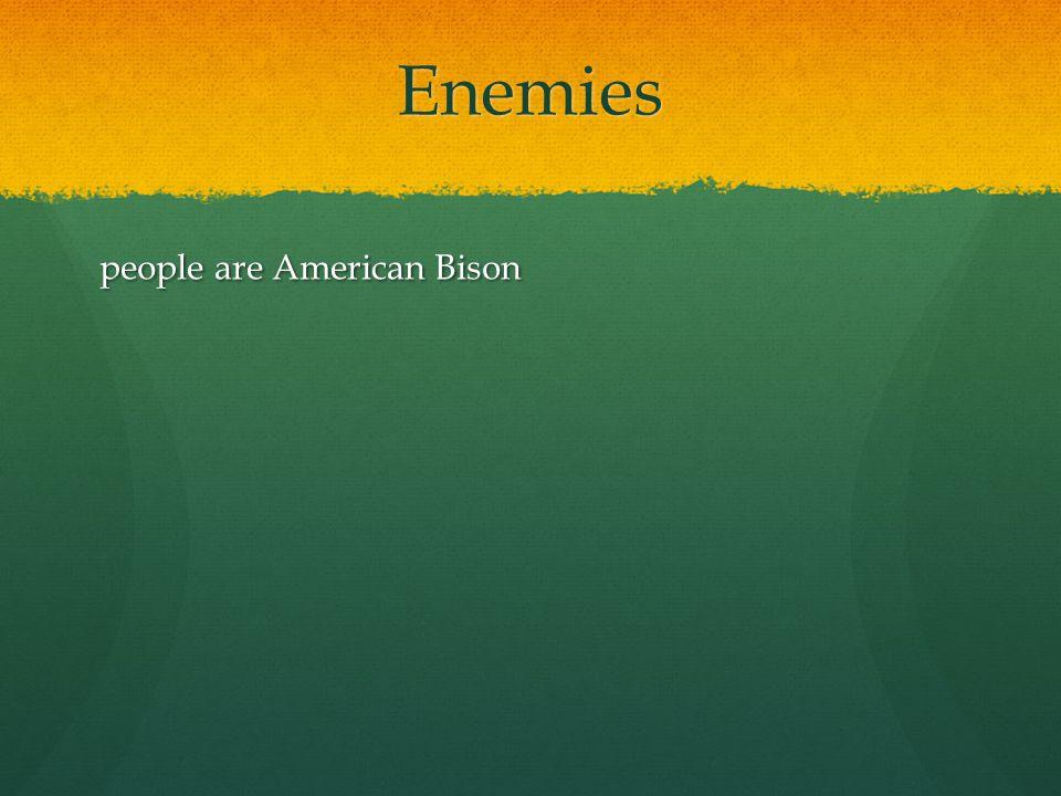 Enemies people are American Bison
