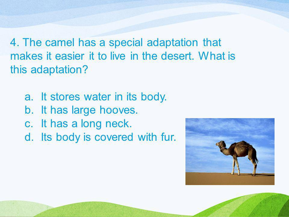 4. The camel has a special adaptation that makes it easier it to live in the desert. What is this adaptation? a.It stores water in its body. b.It has