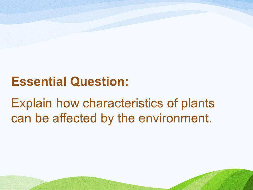 Essential Question: Explain how characteristics of plants can be affected by the environment.